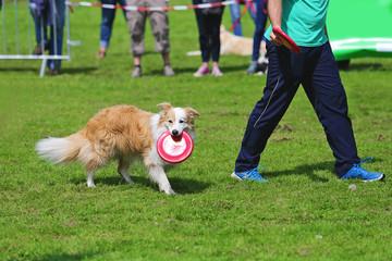 chien jouant au frisbee