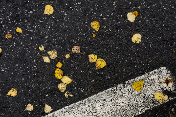 Asphalt road covered with leafs