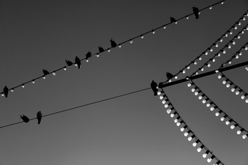 Birds on Bulb Wire