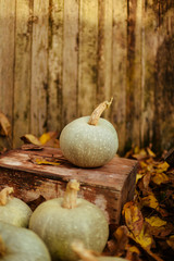 Pumpkin on the ground