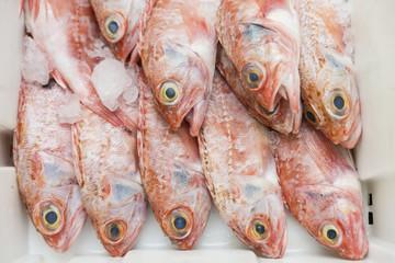 Fresh fish on a fish market