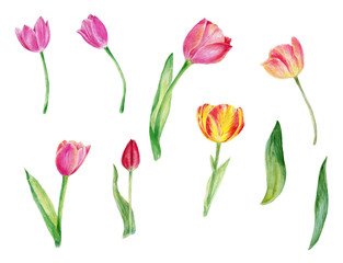 Watercolor tulips, flowers, floral, spring flowers, wedding, birthday, holiday, greeting card, thank you card, bridal shower, hand painted illustration