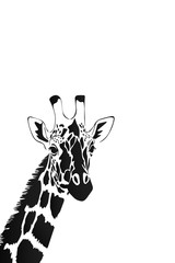 Vector of a giraffe head on white background, Wild Animals.