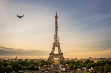 Sunrise scene of Eiffel tower with a pigeon is flying beside, Paris.