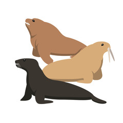 Sea cat and sea lion, flat vector illustration
