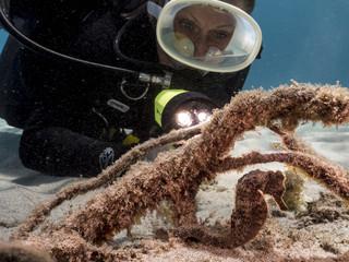 Unterwasser - Riff - Seepferdchen - Taucher - Tauchen - Curacao - Karibik