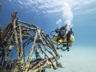 Unterwasser - Riff - Wrack - Fleugzeugwrack - Taucher - Tauchen - Curacao - Karibik