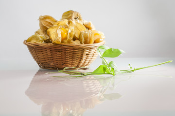 Physalis peruviana fruits in a basket and green plant with light grey background and reflexions