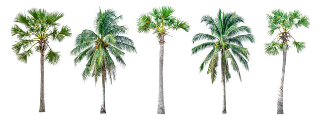 Photo sur Aluminium Palmier Collection of palm trees isolated on white background for use in architectural design or decoration work.