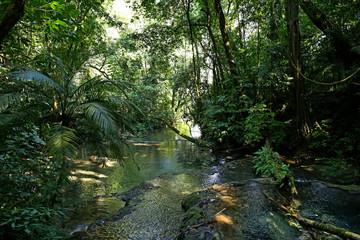 Jungle Creek a stream in the rainforest