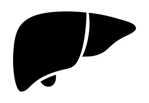 Human liver organ with gallbladder flat vector icon for medical apps and websites