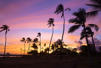 Colorful sunset at Waikiki beach in Hawaii, USA. Tropical beach at sunset with pal grove against the skies.
