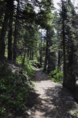 Sun Point nature trail Glacier National park Montana