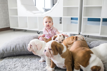 The friendship between a little girl and cute puppies of English bulldog