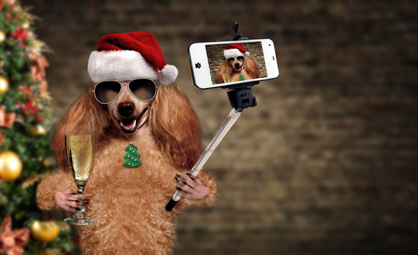 Cinemagraph - Dog in red Christmas hat taking a selfie together with a smartphone. Motion Photo.