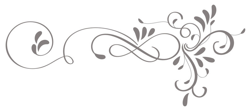 calligraphy flourish art of vintage decorative whorls for design. Vector illustration EPS10