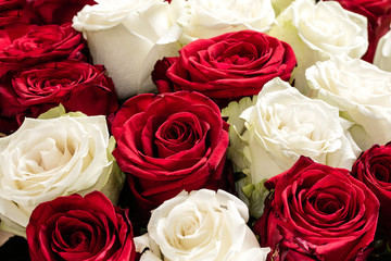 Texture of red and white roses