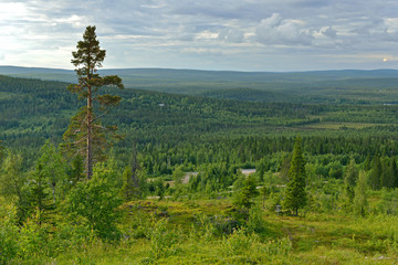 Northern landscape. Forests and hills