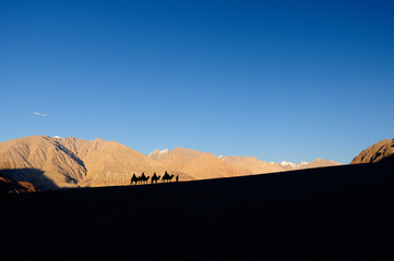 The silhouette of people riding a camel in the desert. With magnificent mountain views in Ladakh, Leh, India