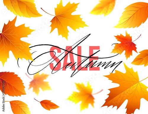 autumn sale banner background with fall leaves vector illustration