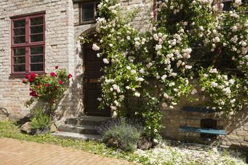 Rankende Rosen, Gartenbank, Backsteinfassade, Mecklenburg-Vorpommern, Deutschland