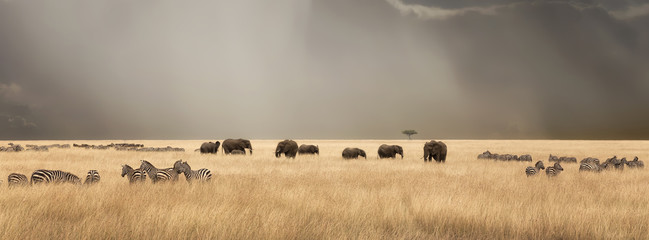 Fotobehang Afrika Stormy skies over the masai Mara with elephants and zebras
