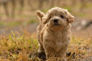 mi pequeño dog