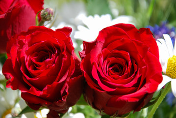 Vibrant red roses