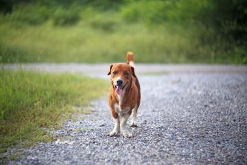 Brown dog smiles.