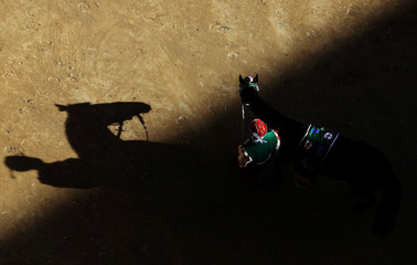 """The horse of the """"Oca"""" (Goose) parish is escorted by a groom during their parade before the Palio of Siena horse race"""
