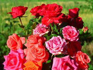 Beautiful bouquet of flowers roses in the garden on a lawn background. A lot of greenery and a flower bed. Landscape design. Nature. Perennial plants