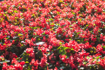 Beautiful scenery with colorful flower garden in Chiang rai, Thailand