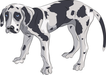 Vector. Puppy of the Great Dane.