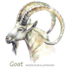 Watercolor goat on the white background. Mountain animal. Wildlife art illustration. Can be printed on T-shirts, bags, posters, invitations, cards, phone cases, pillows.