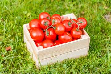 Harvest tomatoes in wooden box