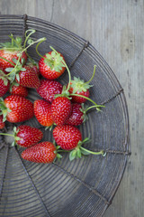 Fresh picked strawberries in wire basket