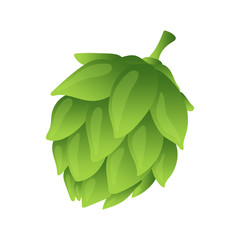 Hop organic herb plant which is used in the brewery of beer. For labels and packaging. Vector illustration. Isolated on white background