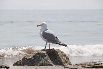 Mr. Boss Bird