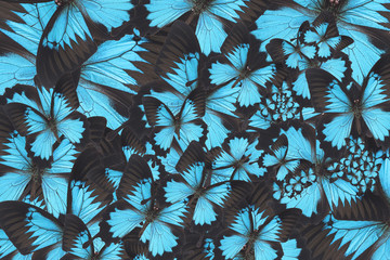 Abstract background made of butterfly wings