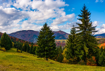 mountains with colorful foliage in conifer forest