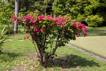 Bush with beautiful tropical flowers in green park