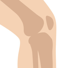 Knee bone joint / articulation with leg flat vector color icon for medical apps and websites