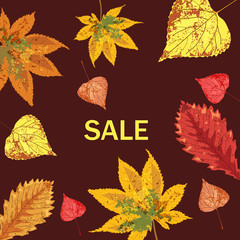 Autumn leaves falling beautiful, set, sale, isolated, vector, illustration