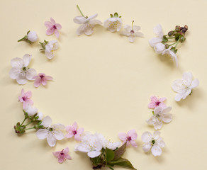 Apple flower blossom circle over light pink background.