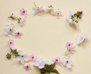 Apple flower blossom circle over light pink background.