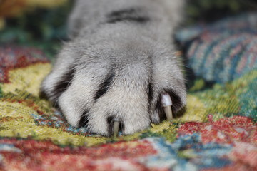 Cat, cat, animals, nature, kitten, paw, tabby cat, claw claw, cat's claw, fur, fluffy