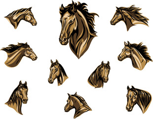 horse, head of a horse, portrait, image, graphics, various options, color