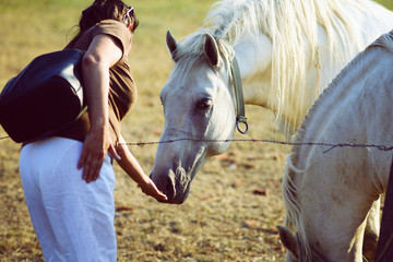 woman fooding white horse