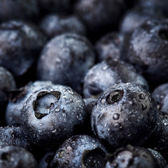 Freshly picked blueberries. Wild berry, Healthy food