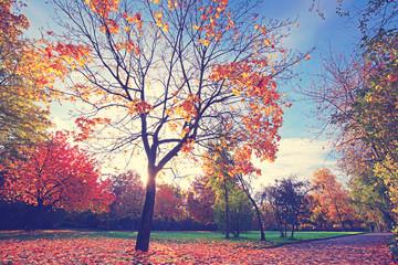 buntes Laub fällt von den Bäumen
